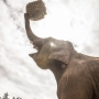Elephantastic: A look inside the Oregon Zoo's new stomping grounds